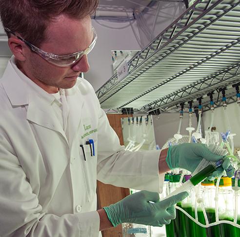 Careers | Algenol Biotech